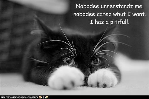 LOL Cats http://icanhascheezburger.com/?s=i+haz+a+pitifull