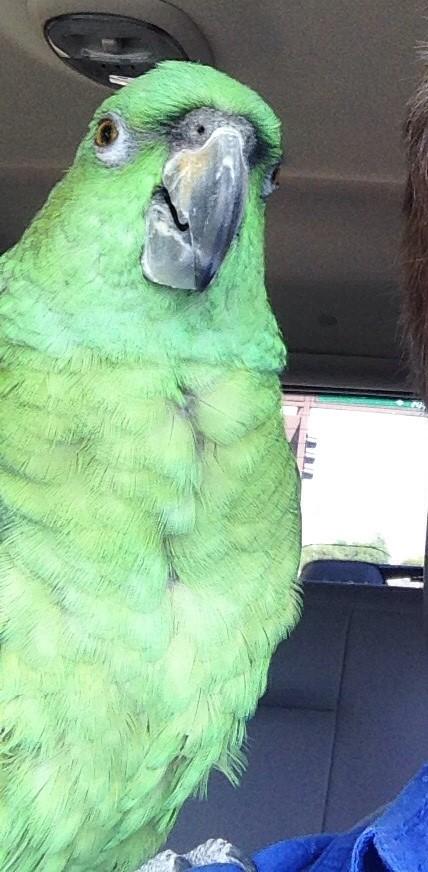 Sitting on my shoulder