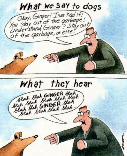 Image result for cartoon what we think dogs hear . what dogs hear