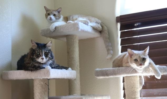 cat_tree_closeup