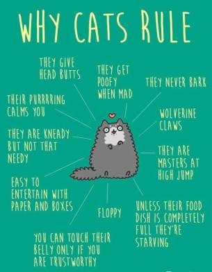 why-cats-rule